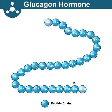 Glucagon hormone chemical structure, 3d illustration, vector on white background Illustration