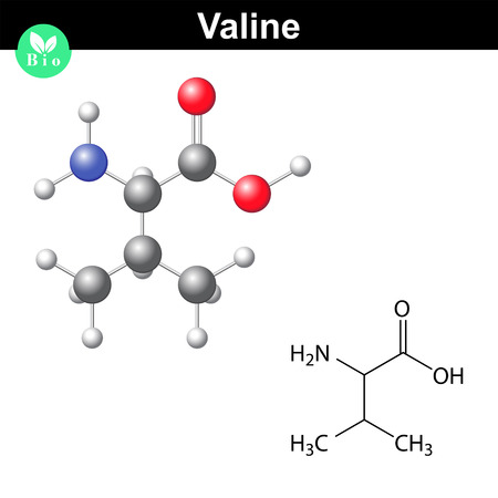 ionic: Valine proteinogenic amino acid - chemical formula and model, 2d and 3d illustration, vector on white background Illustration