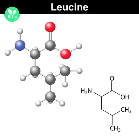leu: Leucine essential amino acid molecular structure and model, 2d and 3d illustration, vector on white background