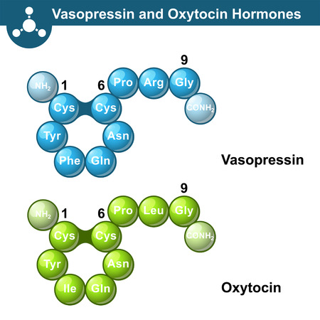 illsutration: Vasopressin and oxytocine hormones, 3d illsutration, ball and stick style, vector on white background Illustration