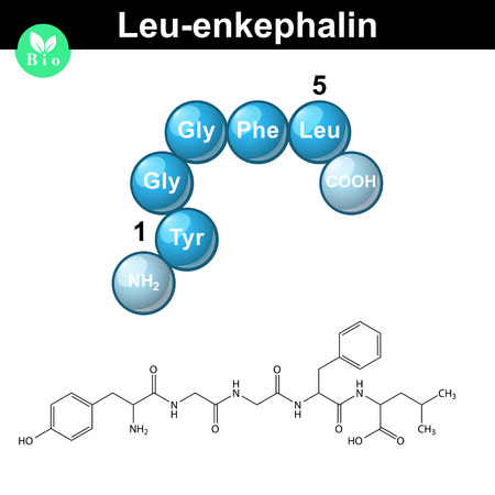 Leu-enkephalin molecule and model, 2d and 3d vector illustration, isolated on white background, eps 10
