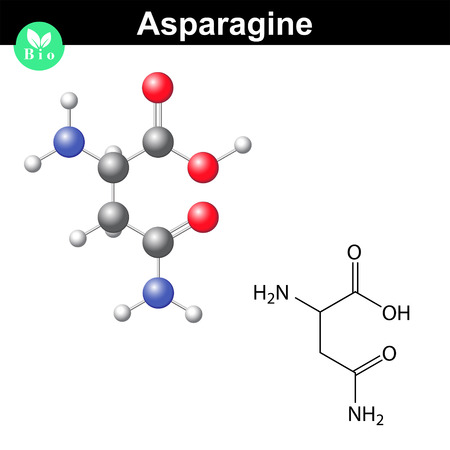 Asparagine proteinogenic amino acid - chemical formula and model, 2d and 3d illustration, vector isolated on white background