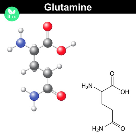 Glutamine proteinogenic amino acid - chemical formula and model, 2d and 3d illustration, vector isolated on white background Stock Illustratie