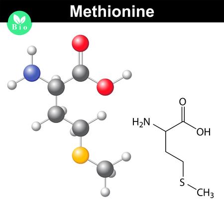 Methionine proteinogenic essential amino acid molecular formula and model, 2d and 3d illustration