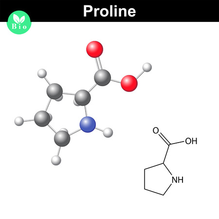 proline: Proline non essential heterocyclic amino acid, 2d and 3d vector illustration, isolated on white background
