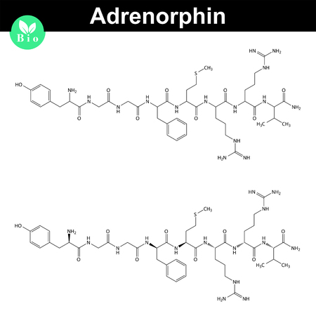 orgasm: Adrenorphin molecular structure, metorphamide chemical formula, 2d vector illustration, isolated on white background Illustration