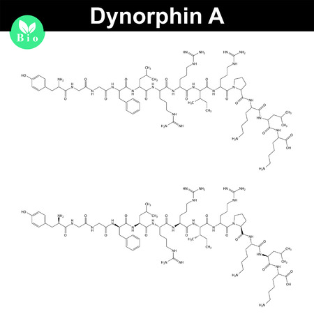 orgasm: Dynorphin A chemical structure, endogenous opioid compound, 2d chemical vector icon, isolated on white background