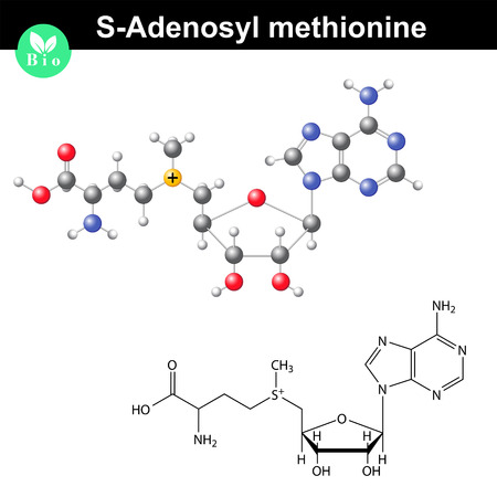 biosynthesis: S-adenosyl methionine coenzyme molecular formula, bio molecule structure, 2d and 3d vector illustration, isolated on white background Illustration