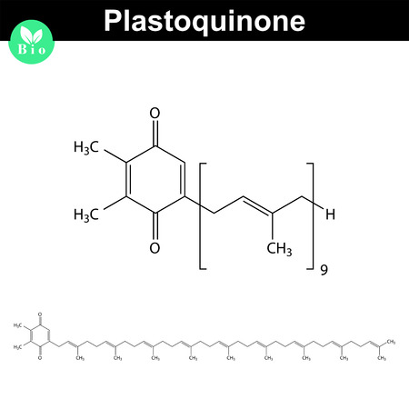 Plastoquinone - photosynthesis electron transport chain part, 2d vector illustration, isolated on white background