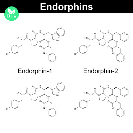 opioid: Human endomorphins chemical structures, biochemical compound icons, endogenous opioid peptides, 2d chemical vector icon, isolated on white background,