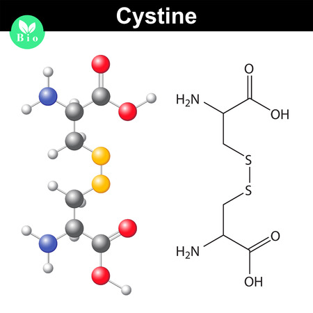 Cystine dipeptide molecular structure, cysteine dimer chemical formula, scientific 2d and 3d vector illsutration, isolated on white background Ilustração