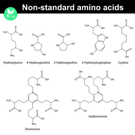 proline: Non-standard amino acids chemical structures, 2d scientific vector illustration, isolated on white background Illustration