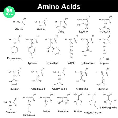 Biogene Aminosäuren, molekulare Strukturen, 2d chemischen Vektor-Illustration isoliert auf weißem Hintergrund Standard-Bild - 68355151