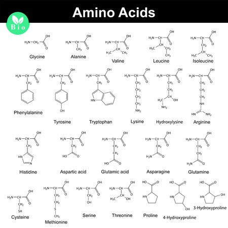chemical bonds: Biogenic amino acids, molecular structures, 2d chemical vector illustration isolated on white background