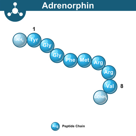 Adrenorphin abstract model, amino acid sequence, ball style, scientific 3d vector illustration, isolated on white background 矢量图像