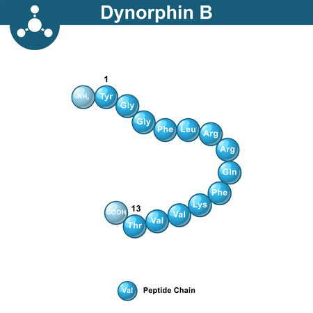 Dynorphin B abstract chemical model, amino acid sequence, scientific 3d vector illustration in ball style, isolated on white background 矢量图像