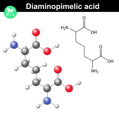 Diaminopimelic acid volume model, derivative of lysine amino acid, gram-negative bacterial cell wall compound, 2d and 3d vector illustration