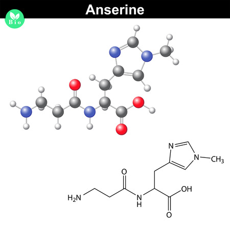 Anserine natural peptide molecule - animal antioxidant chemical compond, scientific 2d and 3d vector illustration, isolated on white background