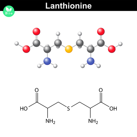 Lanthionine nonproteinogenic alpha- amino acid molecule, 2d and 3d vector illustration of molecular structure