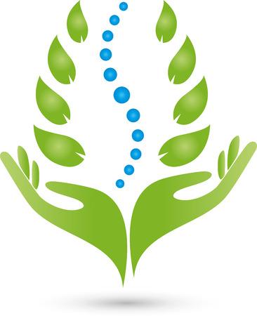 masaje deportivo: Mano Quiroprácticos hojas de plantas Vectores