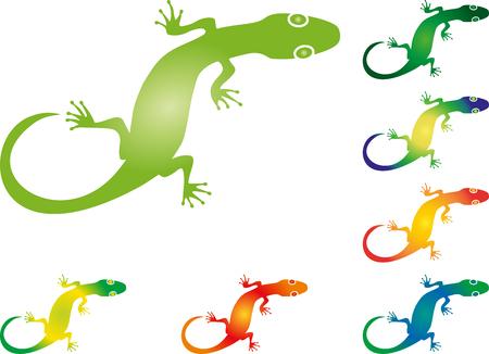 Lizard, salamander, gecko, animal, illustration