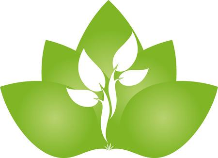 naturopath: Leaves, tree, plant, naturopath, nature