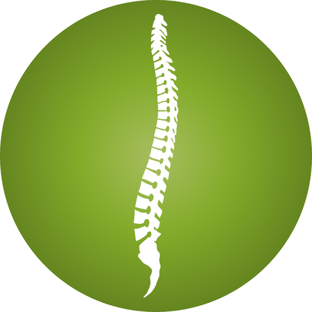 Spine and ball, orthopedics