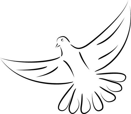 Bird, pigeon, pigeon in flight