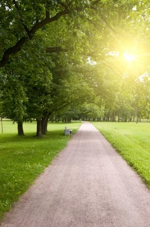walking road in summer park photo