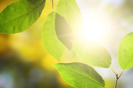 Beautiful autumn leaves in green solar wood