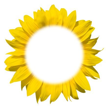 yellow stamens: isolated sunflower frame for your text
