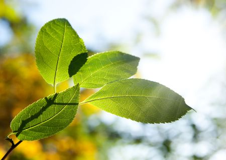 branch green leaves in autumn Stock Photo - 7073956