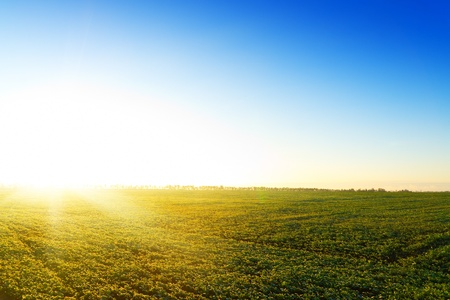 Yellow sunset in green field. Belarus. No cloud. Stock Photo - 8367820