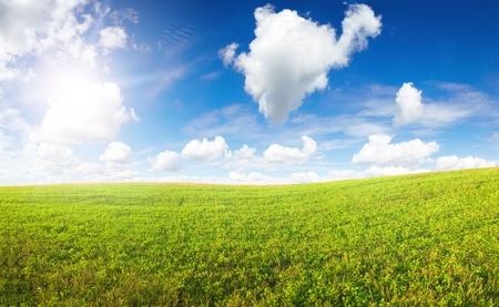 Green field under midday sun. Rural Scene. photo