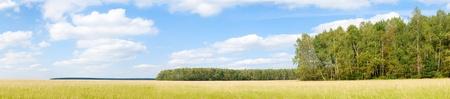 hi resolution: Campo de hierba amarilla cerca de borde del bosque. D�a. Paisaje. HI resoluci�n.