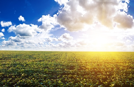 Green field under midday sun. Rural landscape.  photo