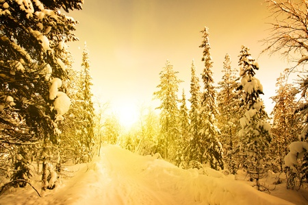 White road in deep forest. December. Winter`s sunset. Russia. photo