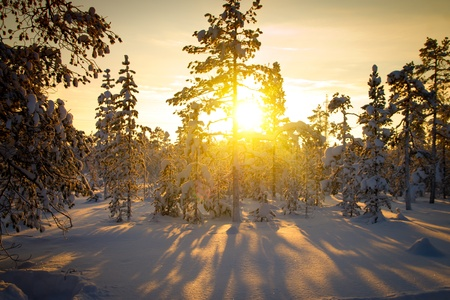 Winter in deep forest  Sunny frosty january  photo