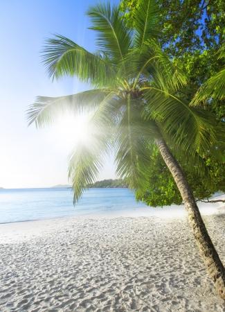 lazio: Praslin island, Seyshelles, Anse Lazio. The island of dreams for a rest and relaxation.