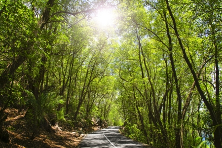 Mahe  Seychelles island  Asphalt road in tropical forest  photo