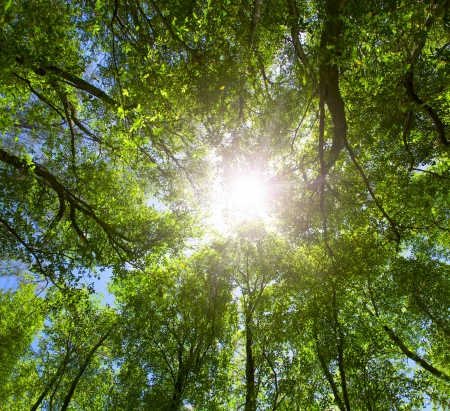 Green forest  Sun light through treetops  Summer  Stock Photo