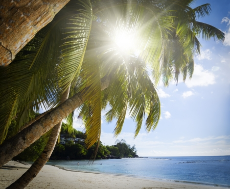 soleil: Mahe island, Seychelles. Anse Soleil, lazare bay (Beach). The island of dreams for a rest and relaxation. White coral beach sand. A heavenly place.