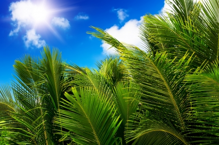 Green palm lush on blue sky background. Summer. Seychelles island. photo