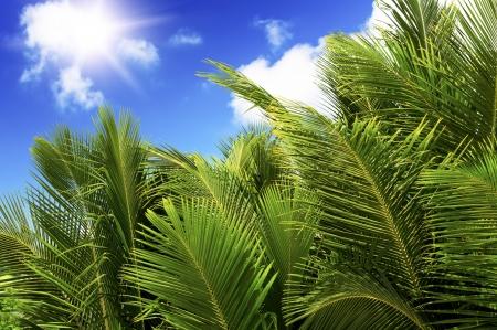 Green palm lush on blue sky background. Summer. Seychelles island. photo