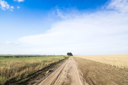 Country road among fields of wheat. Summer, Sunny day. photo