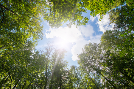 Green forest. Sun light through treetops. Summer. Stok Fotoğraf