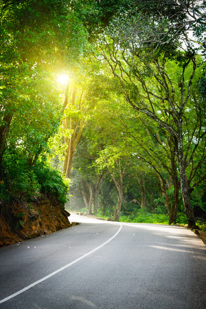 Seychelles. The road to palm jungle. Tropical Paradise. Stock Photo