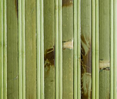bamboo photo