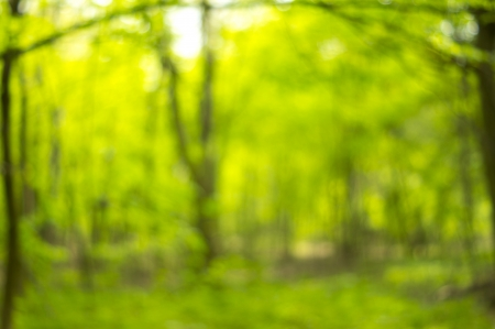 Sunny abstract green nature background, selective focus Banco de Imagens