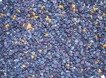 bee pollen: Bee pollen Stockfoto